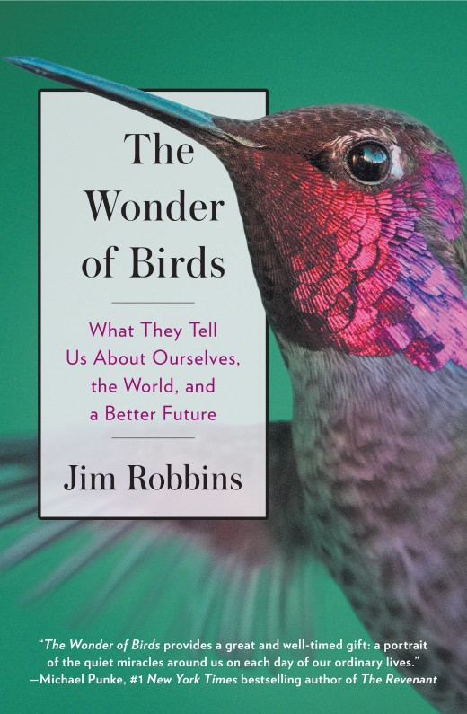 Download ebook The Wonder of Birds